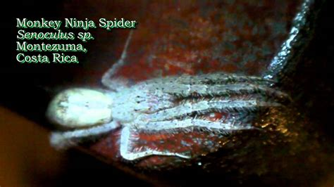 World's Scariest Spiders - YouTube