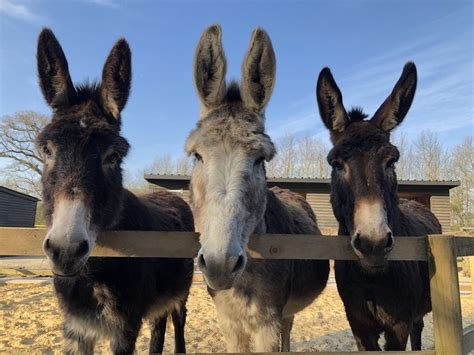 Hayling Island Donkey Sanctuary puts out plea for help as