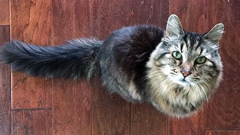 Spotlight: Corduroy is crowned the oldest living cat